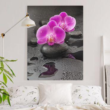 Stampa su tela - Pink Orchid Fiori Sulle Pietre Con Le Gocce - Verticale 4:3