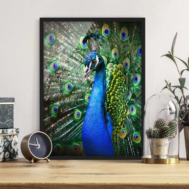 Poster con cornice - Noble Peacock - Verticale 4:3