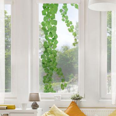 Adesivi da finestra - Heart-Shaped Leaves Ranke