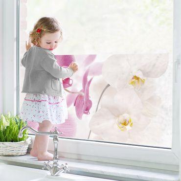 Decorazione per finestre Delicate Orchids