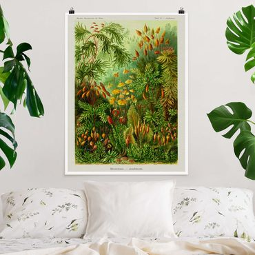 Poster - Vintage Consiglio Moss - Verticale 4:3