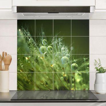 Adesivo per piastrelle - Semi verdi Sotto La Pioggia - Quadrato