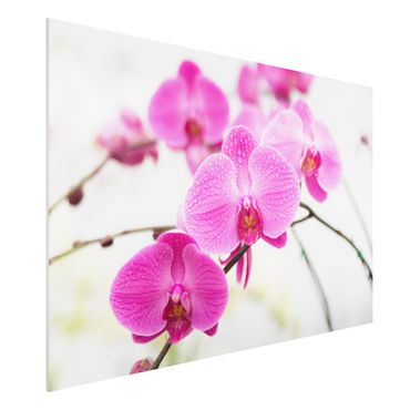Quadro in forex - Close-up of orchid - Orizzontale 3:2