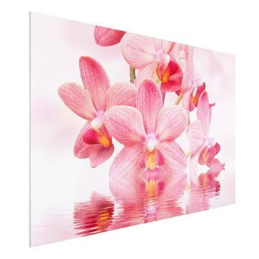 Quadro in forex - Pink Orchid on water - Orizzontale 3:2