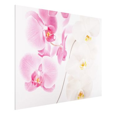 Quadro in forex - Delicate Orchids - Orizzontale 4:3