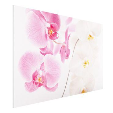 Quadro in forex - Delicate Orchids - Orizzontale 3:2
