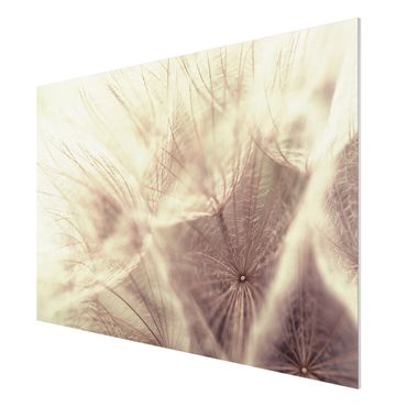 Quadro in forex - Detailed dandelions macro shot with vintage blur effect - Orizzontale 3:2