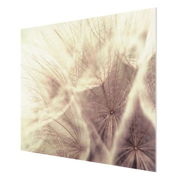 Quadro in forex - Detailed dandelions macro shot with vintage blur effect - Orizzontale 4:3