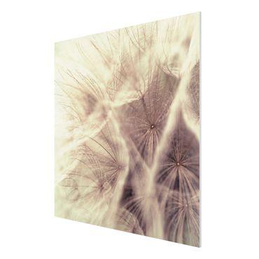 Quadro in forex - Detailed dandelions macro shot with vintage blur effect - Quadrato 1:1