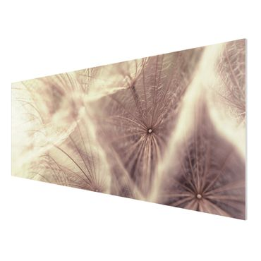 Quadro in forex - Detailed dandelions macro shot with vintage blur effect - Panoramico