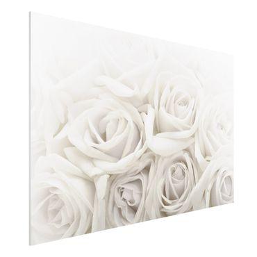 Quadro in forex - White Roses - Orizzontale 3:2