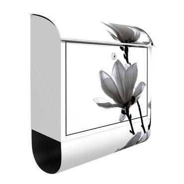 Cassetta postale - Magnolia che sboccia in primavera bianco e nero