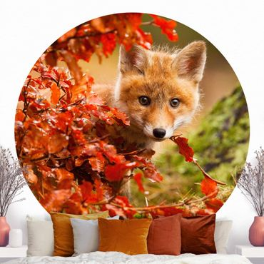Carta da parati rotonda autoadesiva - Fox in autunno