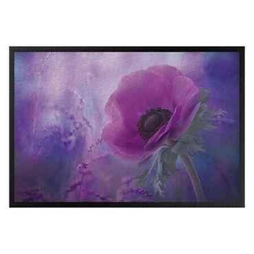 Zerbino - Anemones bloom in violet