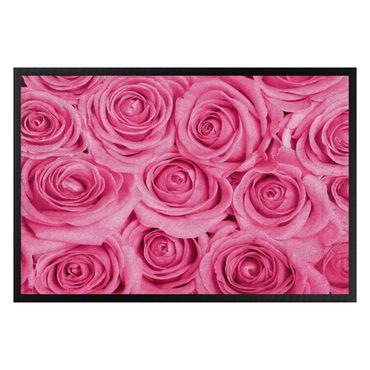 Zerbino - Bed of pink roses
