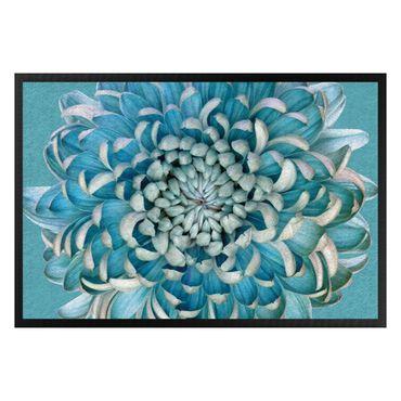 Zerbino - Blue chrysanthemum