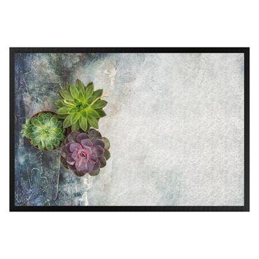Zerbino - Three succulents