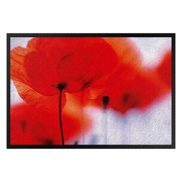 Zerbino - Magic Poppies