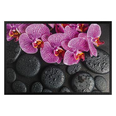 Zerbino - pink orchid