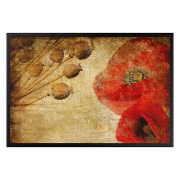 Zerbino - Poppy Flower