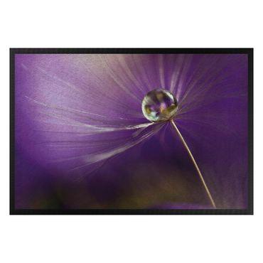 Zerbino - Dandelion in violet