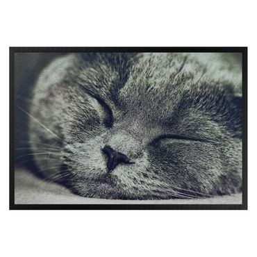 Zerbino - Sleeping Cat