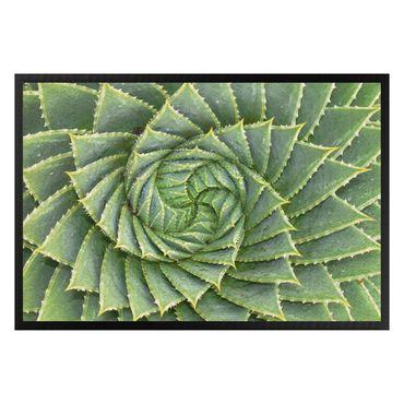 Zerbino - Spiral aloe