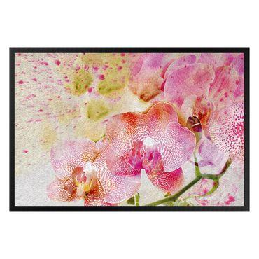 Zerbino - Watercolor Orchids