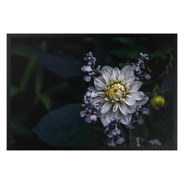 Zerbino - White Dahlia