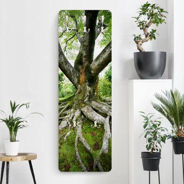 Appendiabiti - Old tree