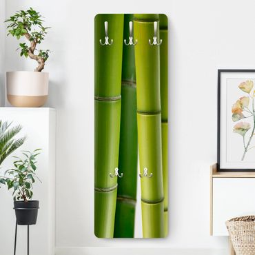 Appendiabiti - Bamboo plants