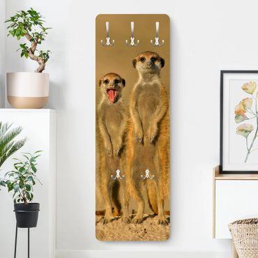 Appendiabiti - Meerkat Family