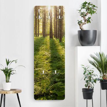 Appendiabiti - Sunrays in a green forest