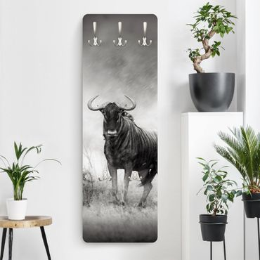 Appendiabiti - Staring Wildebeest