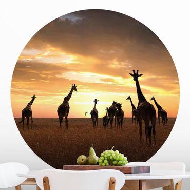 Carta da parati rotonda autoadesiva - famiglia giraffa