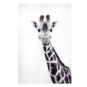 Stampa su tela - Ritratto di giraffa in bianco e nero