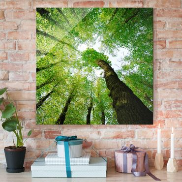 Quadro in vetro - Trees of life - Quadrato 1:1