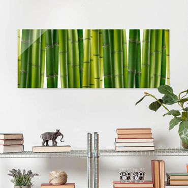 Quadro in vetro - Bamboo plants - Panoramico