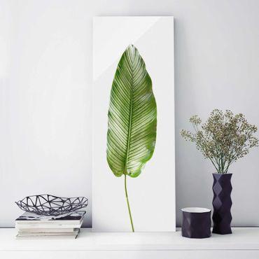 Quadro in vetro - Leaf Calathea Ornata 01 - Pannello