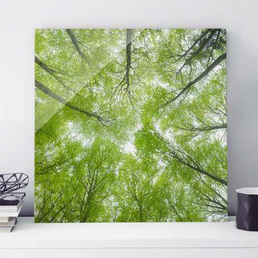 Quadro in vetro - Beech Forest On Lindkogel - Quadrato 1:1
