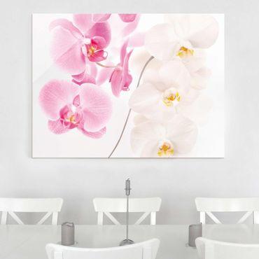 Quadro in vetro - Delicate Orchids - Orizzontale 4:3