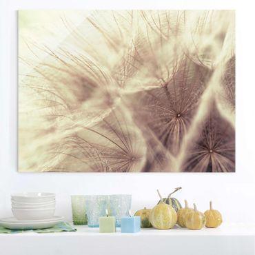 Quadro su vetro - Detailed Dandelions macro shot with vintage Blur effect - Orizzontale 4:3