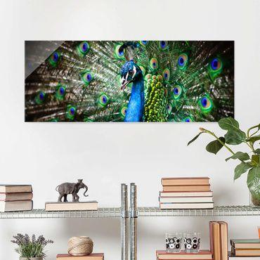 Quadro in vetro - Noble Peacock - Panoramico