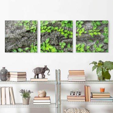 Quadro in vetro - Ivy tree bark - 3 parti