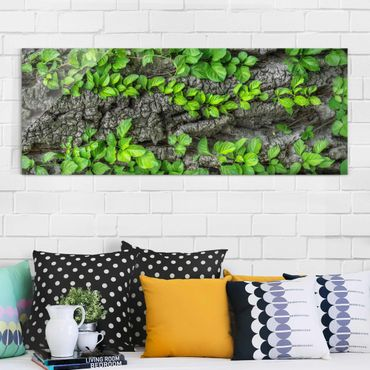 Quadro in vetro - Ivy tree bark - Panoramico