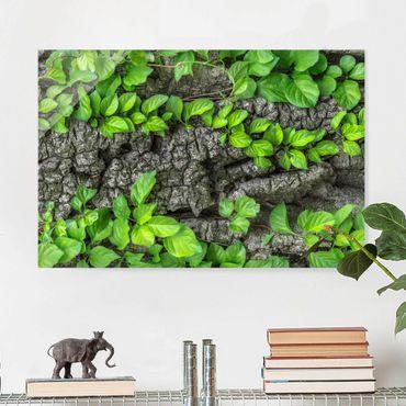 Quadro in vetro - Ivy tree bark - Orizzontale 3:2
