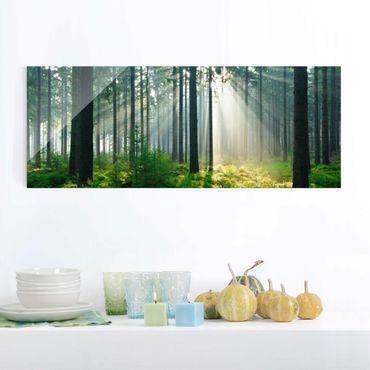 Quadro in vetro alberi - Foresta illuminata - Panoramico