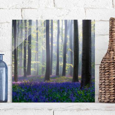 Quadro in vetro - Giorno di Primavera nella Foresta - Quadrato 1:1