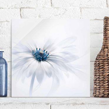Quadro in vetro - Margherita in blu - Quadrato 1:1