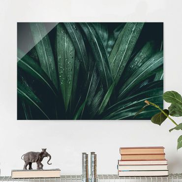 Quadro in vetro - Green Palm Leaves - Orizzontale 3:2